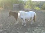 grey white mare2