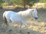 grey white mare3