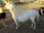grey white mare6