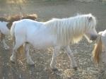 grey white mare