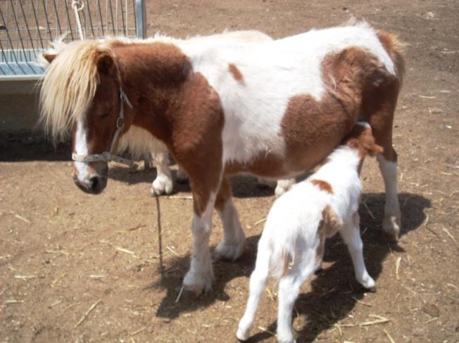 2014 foals